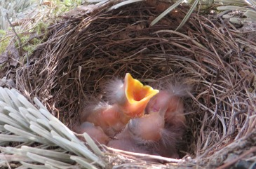 birds-nest-341322_1920